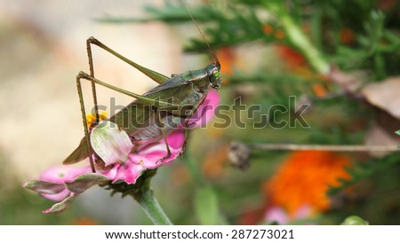 A large grasshopper on a flower - stock photo