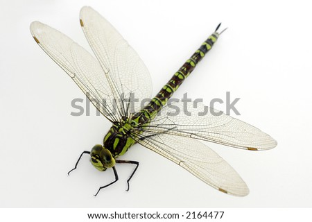 A large green dragonly in the studio on a white background - stock photo