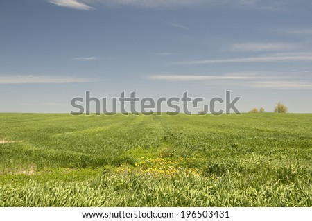A large green grassy field with trees in the distance. - stock photo