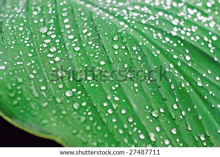 A large green sheet is in the drops of dew, waters