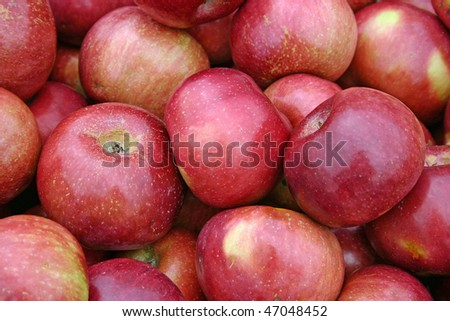 A large group of beautiful red apples