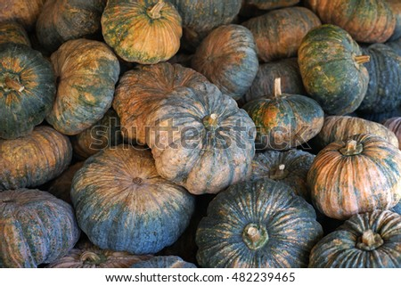 A large group of pumpkin in organic farm