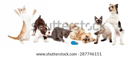 A large group of young cats and dogs playing together. Image sized to fit a common social media banner - stock photo