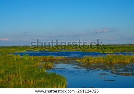 A large Marsh in the country side on a sunny day - stock photo