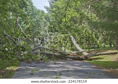 A large oak tree brought down by a storm lies crumbled and broken across a road completely blocking access - stock photo