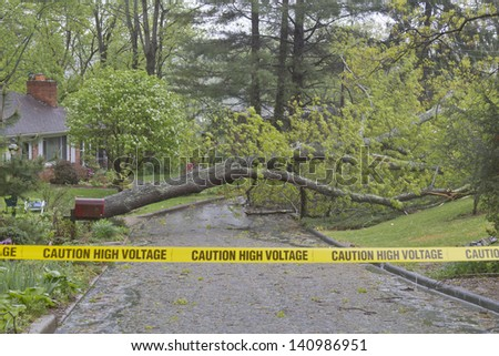 "A large oak tree is blown over by a storm taking down high voltage electric wires across a neighborhood street and is corded off by yellow tape saying ""Caution, High Voltage."" - stock photo"