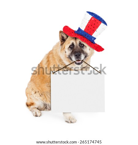 A large patriotic Akita breed dog sitting on a white background wearing a red, white and blue hat while holding a blank sign to enter your message onto - stock photo