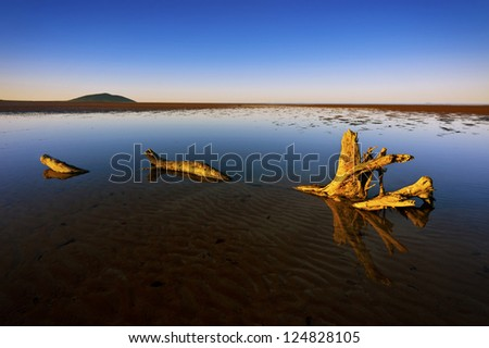 A large piece of driftwood lies in a shallow pool of water under a blue sky.