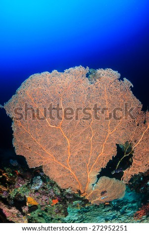 A large sea fan on a tropical coral reef - stock photo
