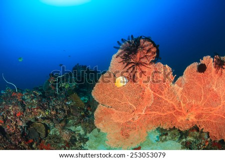 A large sea fan with Crinoids on a deep water coral reef - stock photo