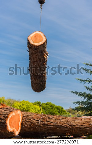 A large section of a Redwood tree is moved by a crane and cable to a trunk bed - stock photo