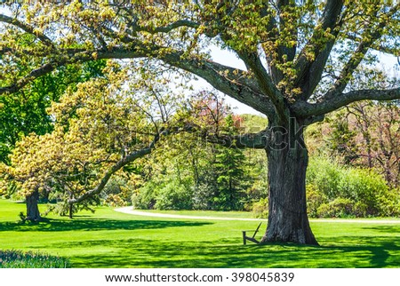A large shade tree in a Long Island park on a nice Spring day. - stock photo