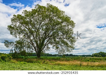 A large shapely tree in this Summer field in Freehold New Jersey. - stock photo