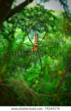 A large spider repairing its web - stock photo