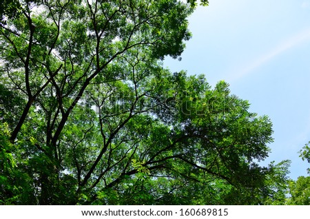 A large tree in a tropical rain forrest - stock photo