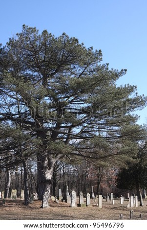 A large tree in the center of a cemetery in Plymouth Indiana - stock photo