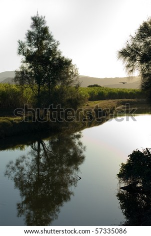 A late afternoon irrigation canal scene adjacent to a Sugar Cane field - stock photo