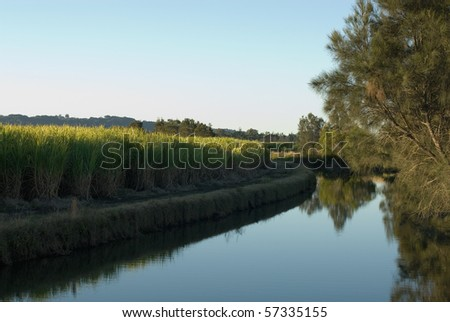 A late afternoon irrigation canal scene, adjacent to a Sugar Cane field - stock photo
