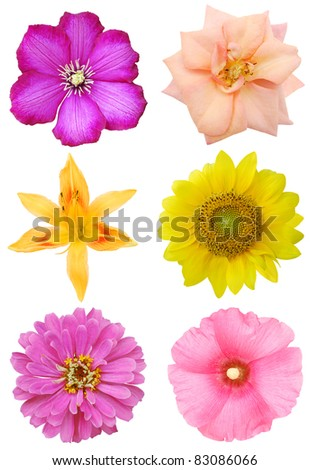 A late summer bloomings in America - stock photo