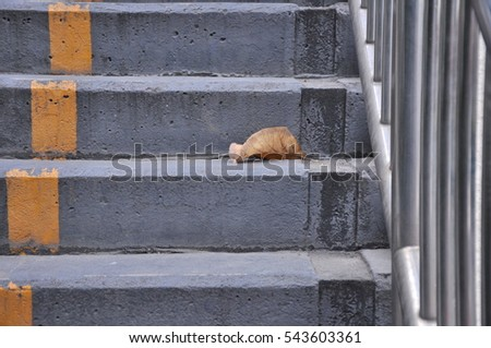 a leaf on the stair bridge