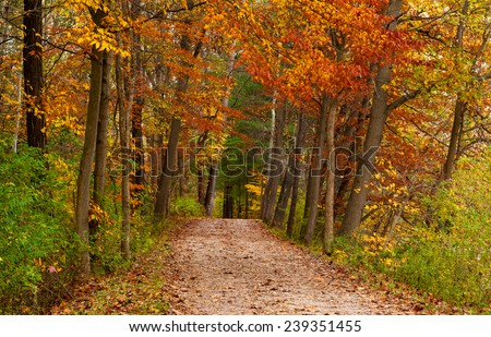 A leaf-strewn road leads through a woods touched by the varied colors of autumn - stock photo