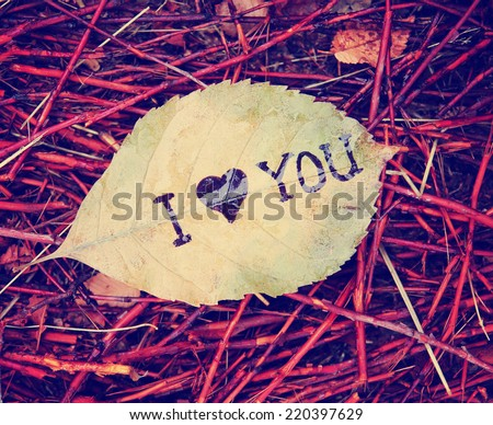 "a leaf that reads ""i love you"" in ink on a pile a twigs on a dreary day (very shallow depth of field - focus on the Y) toned with a retro vintage instagram filter effect - stock photo"