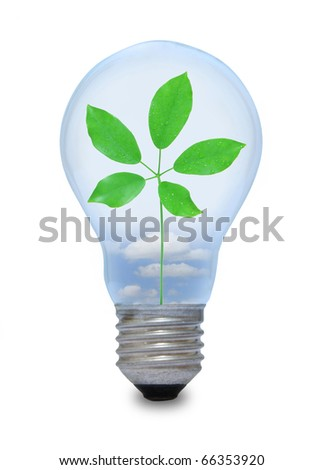 A light bulb with leave inside. - stock photo