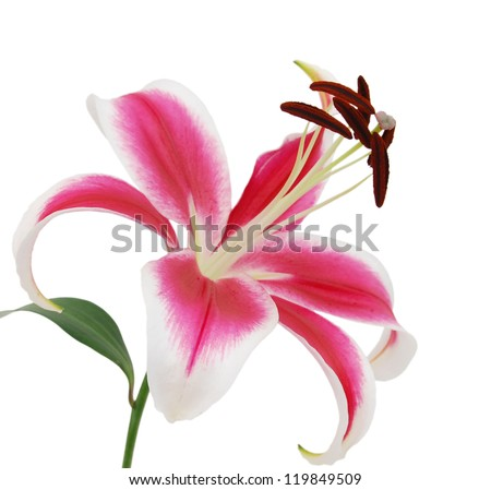 A lily flower decorating - stock photo