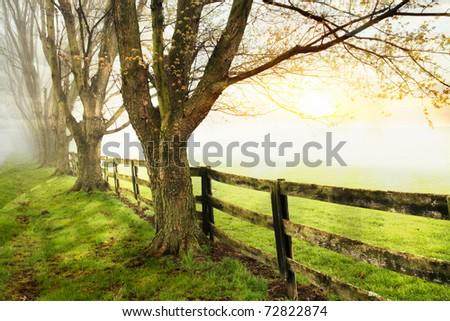 A Line Of Trees And Wooden Fence Bordering A Pasture During A Foggy Sunset, Southwestern Ohio, USA - stock photo
