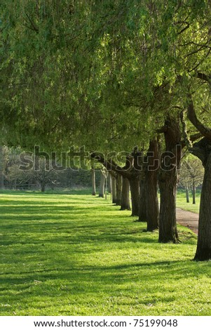 A line of trees with low sunlight shining through from the side