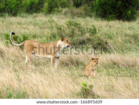 A lioness with cub - stock photo