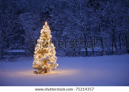 A lite Christmas Tree in a field with a river and forest in the background - stock photo