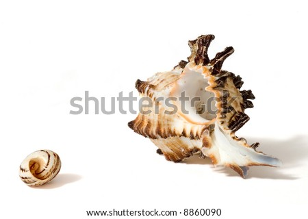 A little and a big sea shell on white background