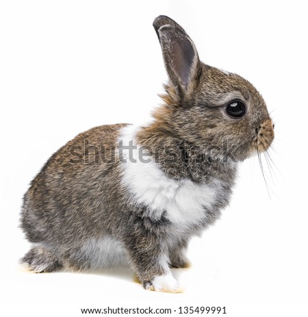 a little baby rabbit on a white background - stock photo