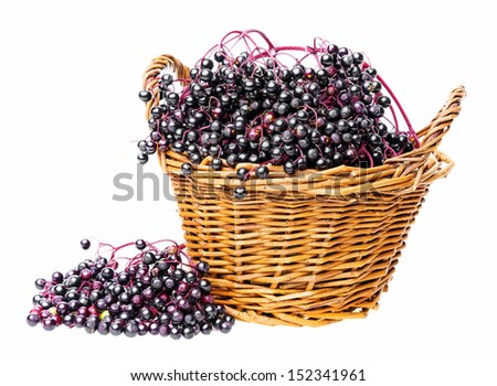 a little basket with black elder herb - stock photo