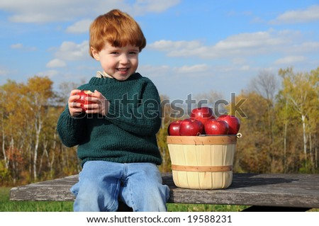 A little boy enjoys eating a Haralson apple while sitting on a picnic table with a bushel basket of the fruit - stock photo