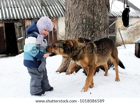 A little boy, feeds a large, growing dog yard, with hands in a rural yard