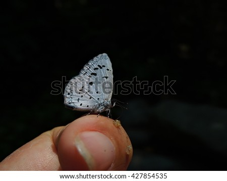 a little butterfly on finger
