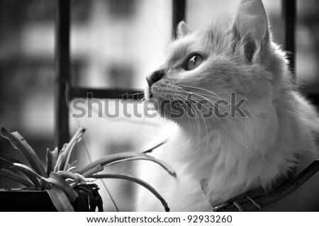 A little cat - stock photo