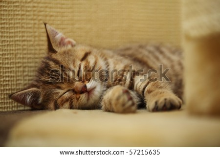 a little cat at home - stock photo
