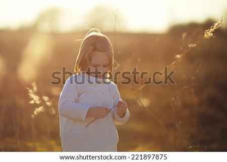 A little cute girl walking in the field in summer morning.  - stock photo