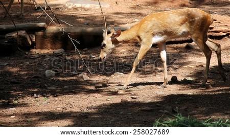 a little deer - stock photo