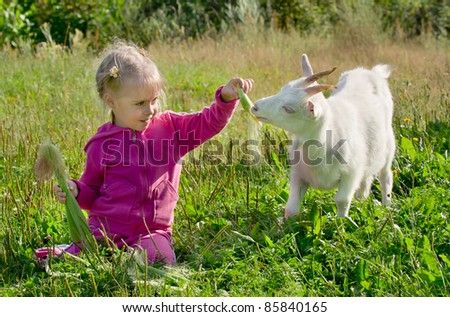 A little girl feeding a goat corn - stock photo