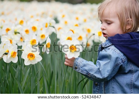 A little girl playing in the narcissus - stock photo