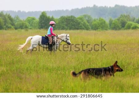 A little girl walks on a horse is a German Shepherd Close Outdoors - stock photo