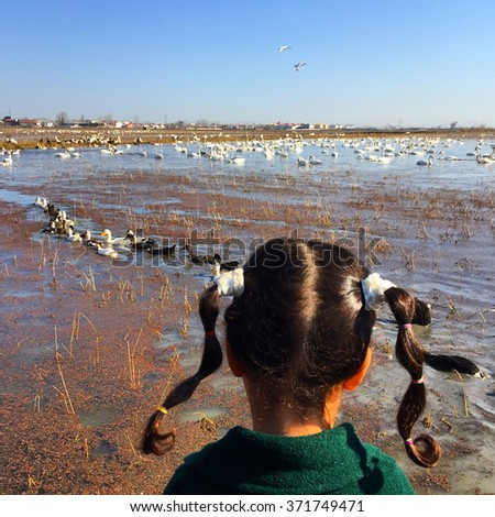 A little girl watching the sea and ducks - stock photo