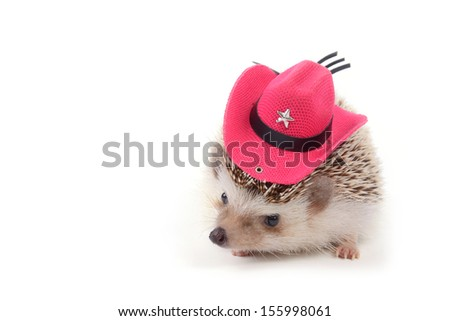 A little hedgehog with red cowboy hat on white background. - stock photo