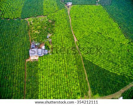 A little house in tea field in Moc Chau plateau, Son La province, Vietnam - stock photo