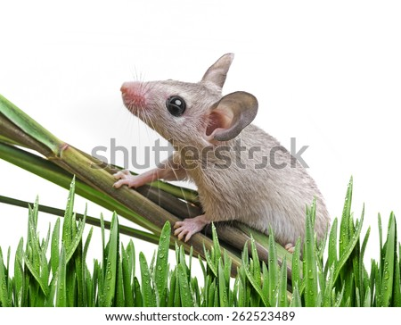 a little mouse sitting on a grass - stock photo