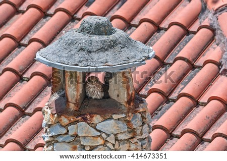 A little owl roosted in a stone chimney - stock photo